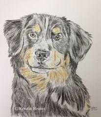 Hundeportrait, Hundezeichnung, Zeichnungen,