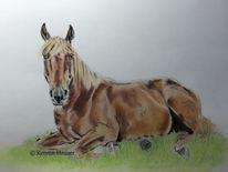 Tierportrait, Pastellmalerei, Pferde, Zeichnung
