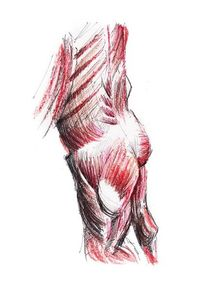 Anatomie, Illustrationen