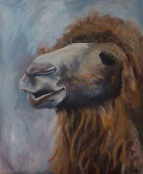 Tiere, Zoo, Portrait, Kamel