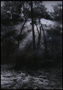Fotografie, Wintermorgen