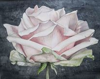 Rose, Aquarellmalerei, Rosa, Portrait