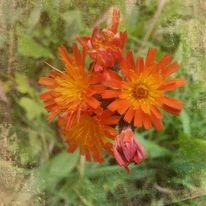 Blumen, Romantisch, Digitale kunst, Teil