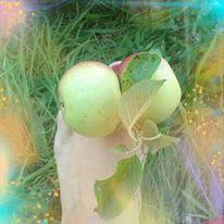 Wiese, Fuß, Apfel, Fotografie