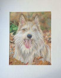 Tiere, Portrait, Pastellmalerei, Kreide