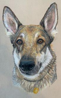 Hund, Pastellmalerei, Tiere, Kopf