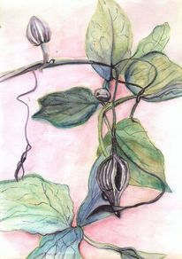 Blätter, Ranken, Farben, Blumen