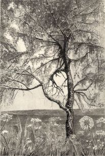 Wiese, Birken, Landschaft, Pflanzen