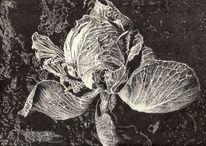 Pflanzen, Kohl, Blätter, Natur