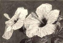Stempel, Hibiskus, Blüte, Blätter