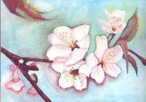 Zweig, Blätter, Kirsche, Blüte