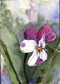 Hornveilchen, Blumen, Veilchen, Blüte
