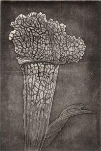 Radierung, Druckgrafik, Ätzung, Blumen