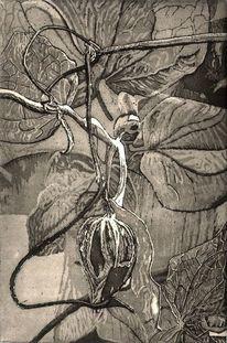 Schwarz weiß, Knospe, Blätter, Ätzung