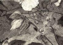Pflanzen, Zeichnung, Blüte, Knospe