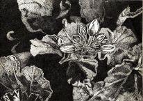 Blätter, Pflanzen, Blüte, Balkon