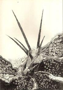 Pflanzen, Schwarz weiß, Zeichnung, Kaktus