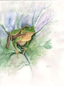 Tier tiere, Frosch, Aquarell frosch, Landschaft