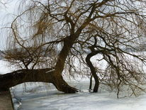 Baum eis, Fotografie, Baum