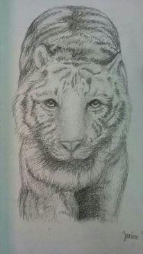 Zeichnungen, Tiere, Tiger