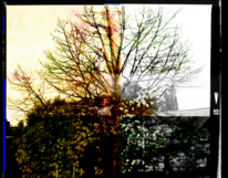 Mittelformat, Yashika, Baum, Himmel