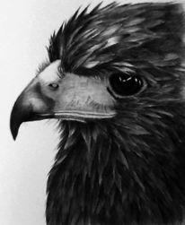Vogel, Adler, Tiere, Zeichnung