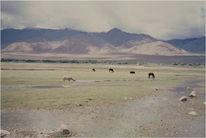 Büttenpapier, Pferdelandschaft, Tibet, Fotografie