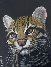 Katze, Polychromos, Zeichnung, Ozelot