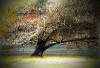Oderlandschaft, Kreide, Strauch, Baum