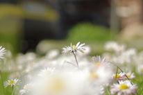 Blumen, Natur, Nahaufnahme, Frühling