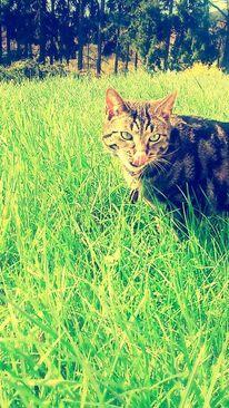 Frühling, Wiese, Katze, Fotografie