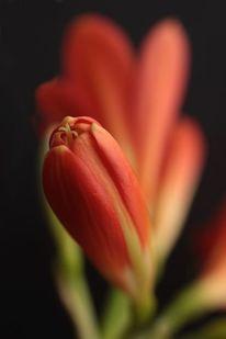 Ausdruck, Pflanzen, Zeitlos, Blumen