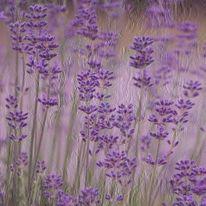 Ausdruck, Pflanzen, Textur, Fotografie