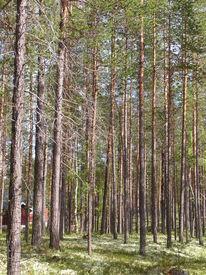 Baum, Schweden, Ausdruck, Fotografie