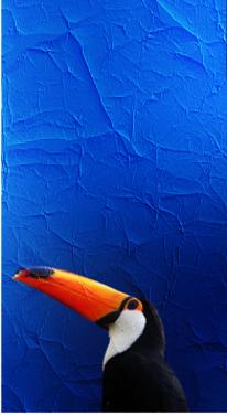 Orange, Vogel, Digital, Struktur