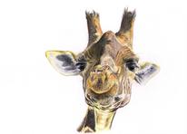 Gelb, Braun, Buntstiftzeichnung, Giraffe