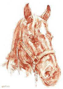 Pferde, Rötel, Sepia, Zeichnung