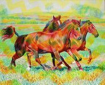 Freude, Wiese, Pferde, Pferde2002