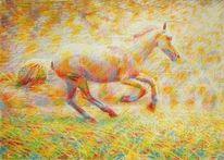 Galopp, Pferde, Tiere, Sonnenlicht