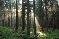 Natur, Sonnenstrahlen, Fotografie, Naturfotografie