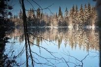 Winter, Teich, Spiegel, Harz