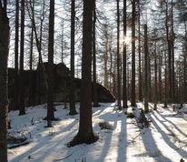 Nachmittag, Natur, Achtermannshöhe, Sonnenstrahlen