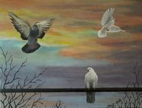 Taube, Äste, Sonnenuntergang, Himmel