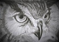 Bleistiftzeichnung, Eule, Zeichnung, Augen