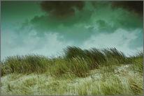 Dünen, Niederlande, Insel, Texel