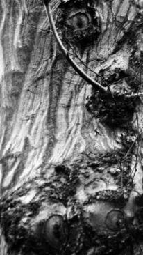Schwarz, Gesicht, Fotografie, Baum