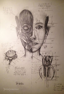 Zeichnung, Anatomie, Menschen, Bleistiftzeichnung