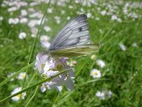 Schmetterling, Pflanzen, Natur, Tiere