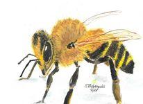 Schwarz, Gelb, Biene, Portrait