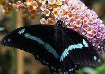 Schmetterling, Blumen, Duft, Fotografie
